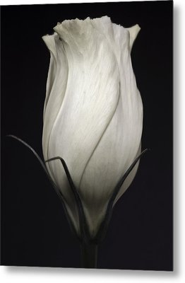 Black And White Rose Flower Art Work Photography Metal Print