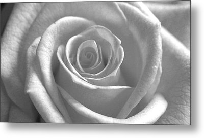White Rose Glooming Metal Print by Silke Brubaker