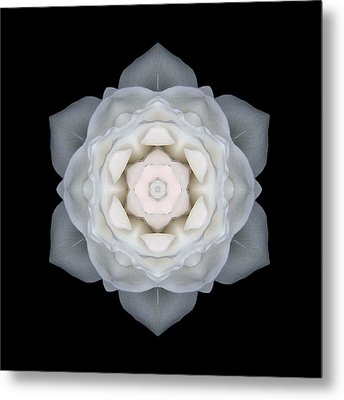 White Rose I Flower Mandala Metal Print by David J Bookbinder