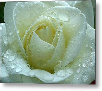 White Rose Metal Print by Juergen Roth