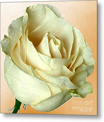 Metal Print featuring the photograph White Rose On Sepia by Nina Silver