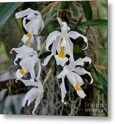 White Simplicity Metal Print by Butch Phillips