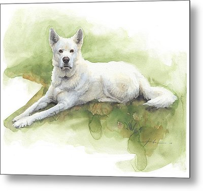 White Sled Dog Lying On Grass Watercolor Portrait Metal Print by Mike Theuer