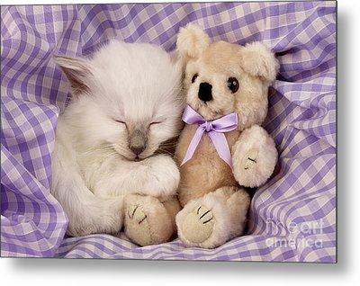 White Sleeping Cat Metal Print by Greg Cuddiford