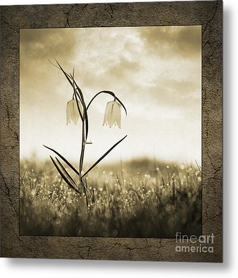 White Snakes Head Fritillary In Morning Dew Metal Print by Tim Gainey