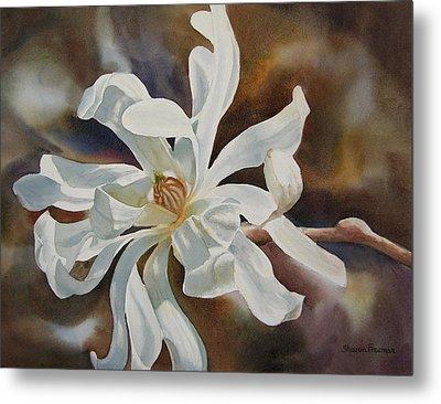 White Star Magnolia Blossom Metal Print by Sharon Freeman