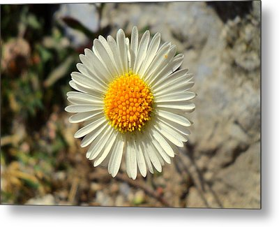 White Wild Flower Metal Print
