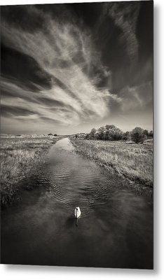 White Swan Metal Print by Dave Bowman