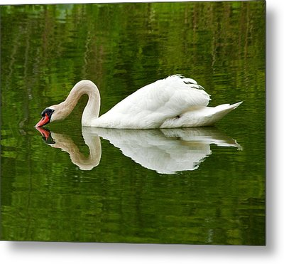 Metal Print featuring the photograph Graceful White Swan Heart  by Jerry Cowart