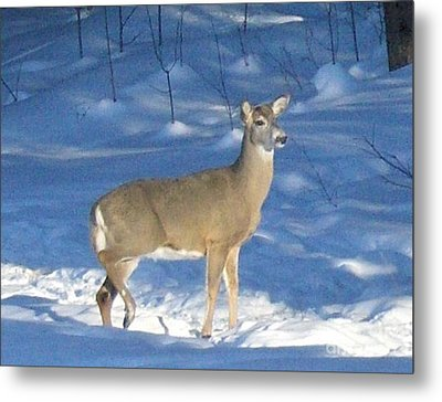 Metal Print featuring the photograph White Tail Deer by Brenda Brown