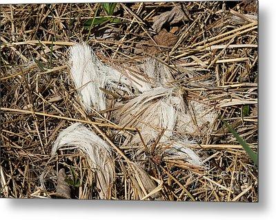 White-tailed Deer Hair Metal Print by Linda Freshwaters Arndt