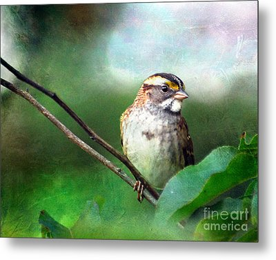 White-throated Sparrow Metal Print by Kerri Farley