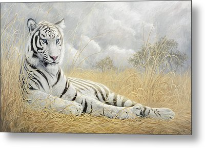 White Tiger Metal Print by Lucie Bilodeau
