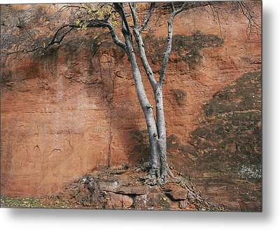 White Tree And Red Rock Face Metal Print