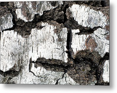 Metal Print featuring the photograph White Tree Bark by Crystal Hoeveler