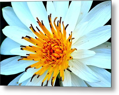Metal Print featuring the photograph White Water Lilly II by Jodi Terracina