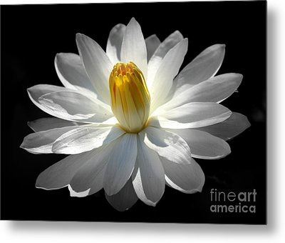 Metal Print featuring the photograph White Water Lily #2 by Lisa L Silva