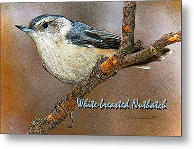 Metal Print featuring the photograph Whitebreasted Nuthatch by A Gurmankin