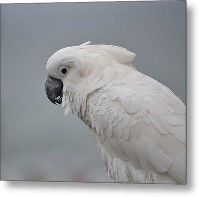 Whitest Bird Metal Print by Kiros Berhane