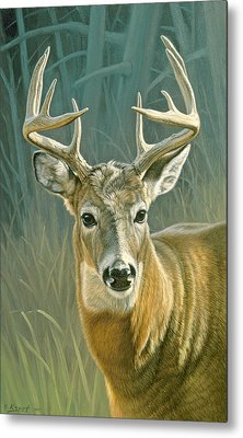 Whitetail Buck Metal Print by Paul Krapf