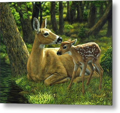 Whitetail Deer - First Spring Metal Print by Crista Forest