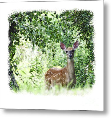 Whitetail Fawn Metal Print by Deborah Johnson