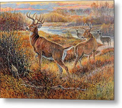 Whitetail Sunrise Metal Print by Steve Spencer