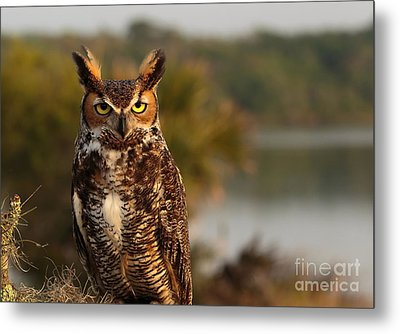 Who Goes There Metal Print by Mary Lou Chmura