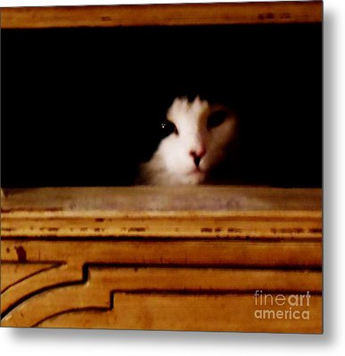 Who Me Metal Print by Sharon Costa