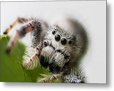 Who You Looking At  Metal Print by Craig Lapsley