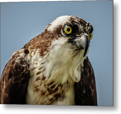 Metal Print featuring the photograph Whoa Is Me by Linda Karlin