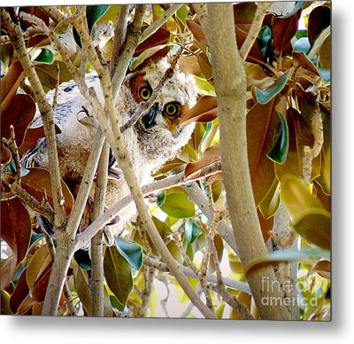 Whooo Are You? Metal Print
