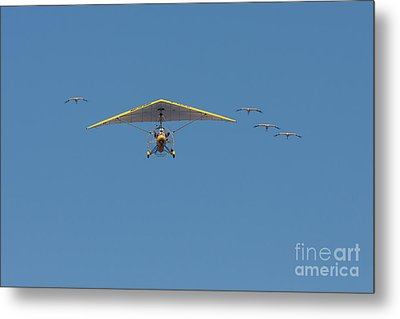 Metal Print featuring the photograph Whooping Cranes And Operation Migration Ultralight by Paul Rebmann