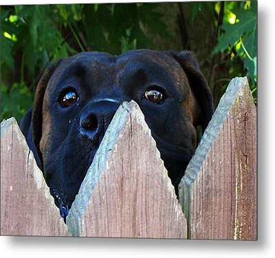 Metal Print featuring the photograph Who's There by B Wayne Mullins