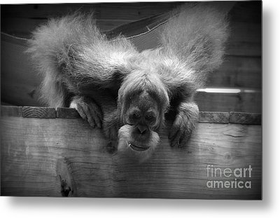 Who's There? Metal Print by Lisa L Silva