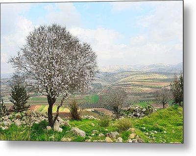 Wild Almond Tree In Beautiful Scenery Metal Print