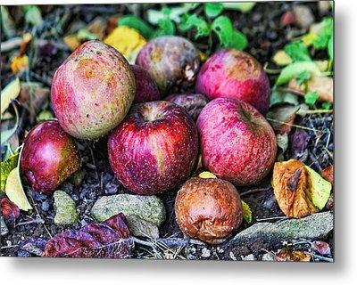Wild Apples Metal Print by Lee Dos Santos