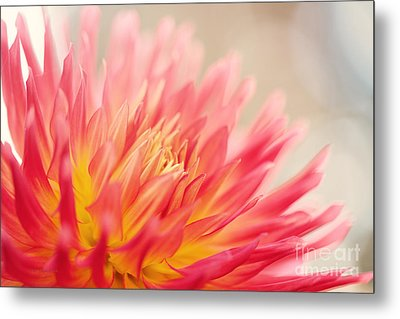 Wild At Heart Metal Print by Beve Brown-Clark Photography