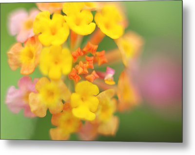 Metal Print featuring the photograph Wild Beauty by Afrison Ma