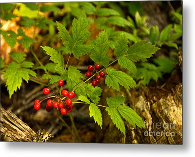 Wild Berries Metal Print