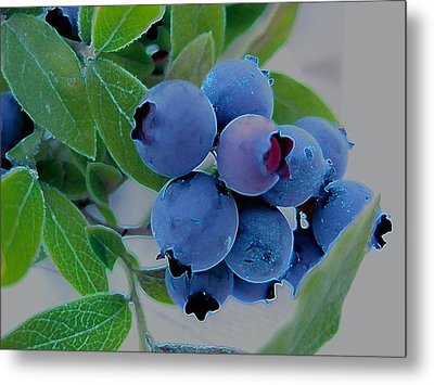 Wild  Blueberries Metal Print by Shirley Sirois