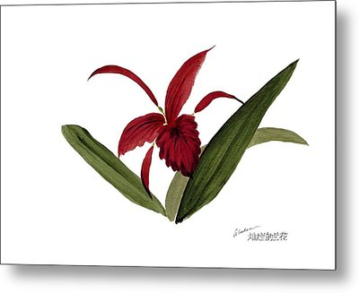 Wild Chinese Orchid #3 Metal Print by Alethea McKee