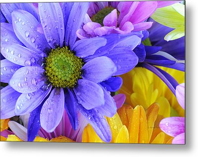 Wild Crazy Daisies 2 Metal Print by Kenny Francis
