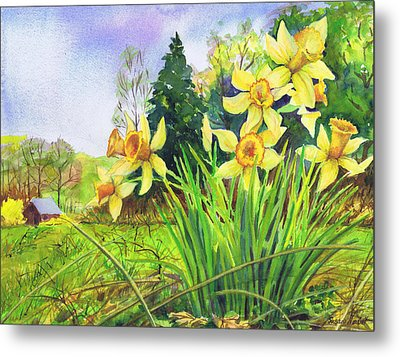 Wild Daffodils Metal Print by Susan Herbst