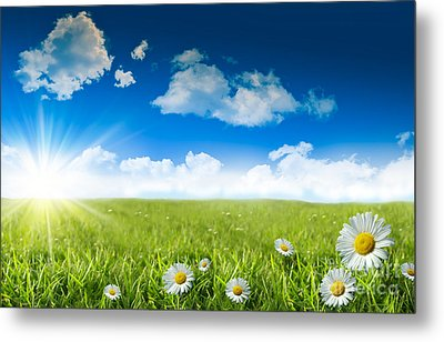 Wild Daisies In The Grass With A Blue Sky Metal Print by Sandra Cunningham
