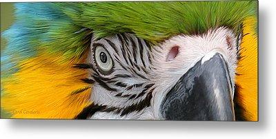 Wild Eyes - Parrot Metal Print by Carol Cavalaris