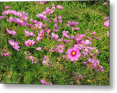 Wild Flower Metal Print by Anna Liza Jones