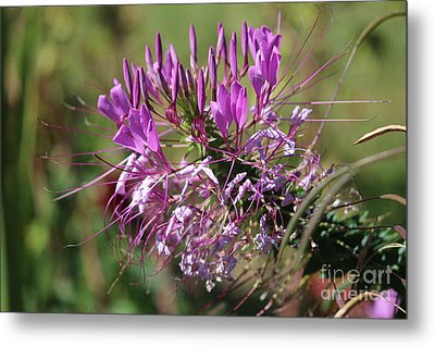 Wild Flower Metal Print by Cynthia Snyder