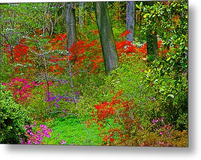 Wild Flower Garden Metal Print by Andy Lawless