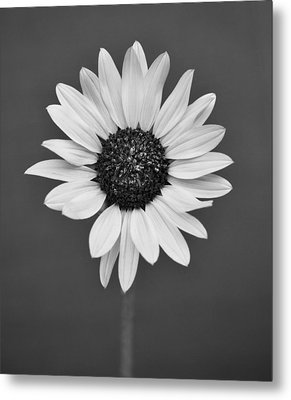 Wild Flower Metal Print by Kjirsten Collier